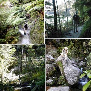 NEW ZEALAND Abel Tasman walk collage_edited-1