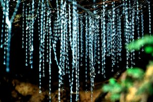 NEW ZEALAND Waitomo Caves Glowworms cropped