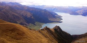 NEW ZEALAND The Neck новичёк